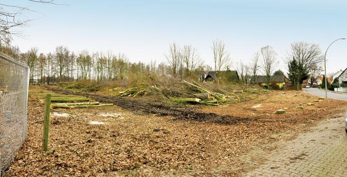 Ein Bild der Zerstörung: Viele Bäume sind gefällt worden an der Eberhard-Unkraut-Straße. Hier sollen nun Einfamilienhäus