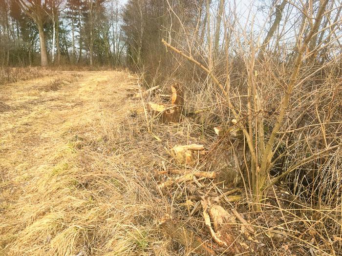 """""""Abgesemmelt"""", Naturfreunde sind sauer über die Fällung von Weiden im Bereich Emsweg/Birkendamm. Im  Umweltausschuss so"""