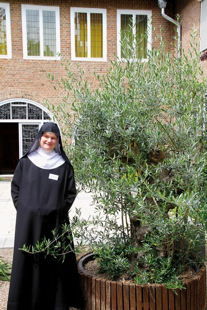 Schwester Teresa zeigt den prachtvollen Olivenbaum, der sich seit der NRW-LGS im Kloster allen Wintern zum Trotz mächtig gem
