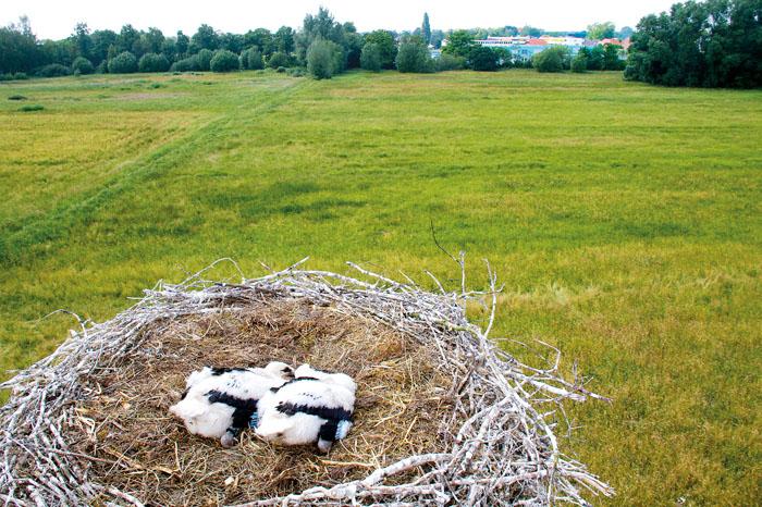 Einen tollen Blick haben die Knirpse vom Nest aus in Richtung Kernstadt und damit Förderschulen am Torfweg. Foto: RSA/robui