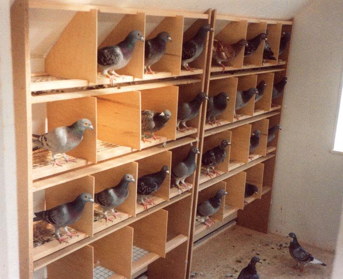 Blick in den Taubenschlag von Klaus-Dieter Kneuper, der oft, im positiven Sinne, seine zweite Wohnstube war. Fotos privat