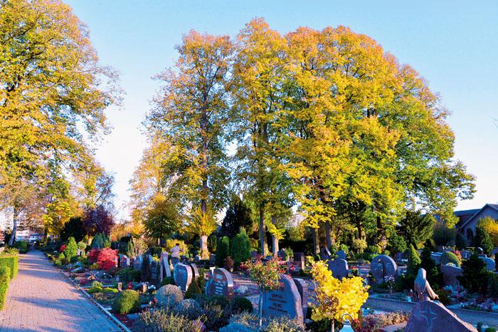Die Baumgruppe auf dem Friedhof an der Mastholter Straße muss weichen. Zu groß ist mittlerweile die Gefahr durch herabfalle