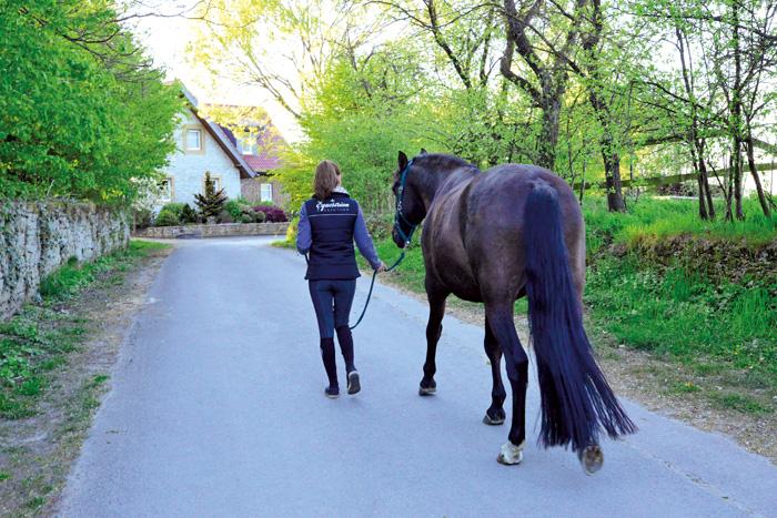 Oft beschränken sich die Reiter auf einen kurzen Spaziergang mit dem Pferd, um den Aufenthalt am Stall möglichst kurz zu ha